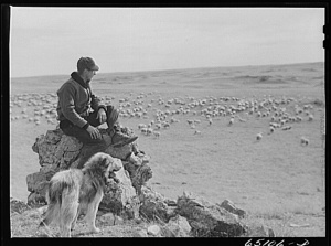 Herder Watching Sheep